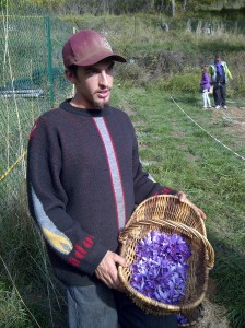 Christophe Marro with a basket of harvested saffron crocus