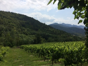Vineyards on the lower slopes