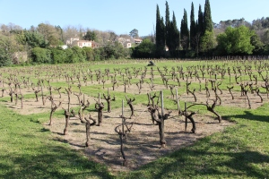 Vine 'museum' behind the Maison des Vins Coteaux Varois at La Celle