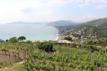 Cantine Bregante vineyards up in the hills overlooking the sea