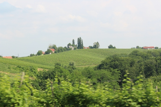 Vineyards in Jeruzalem, Slovenia