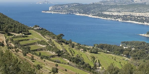 Vineyards of Cassis with Chateau d'If in the distance