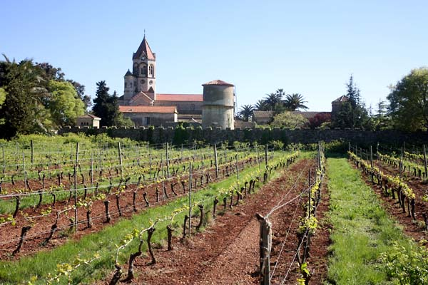 ile St Honorat vineyard