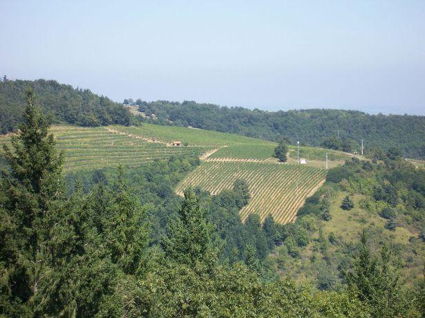 Vignoble_du_Côtes-du-forez